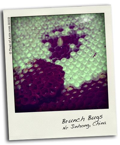 Brunch Bugs