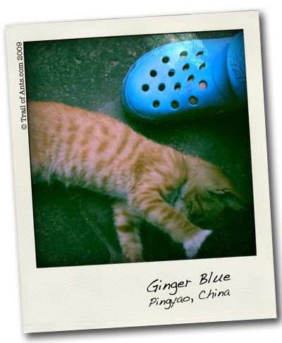 Ginger Blue