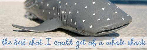 Ningaloo Reefs Whale Sharks