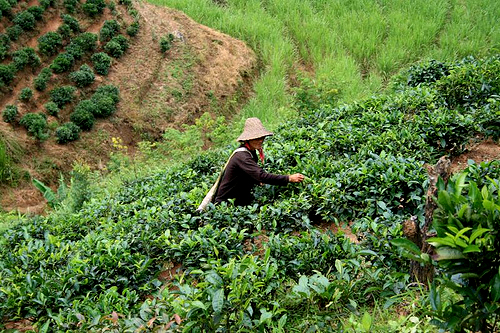 Rice Terraces in Yunnan